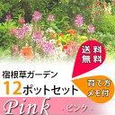【送料無料】花苗 ピンクガーデンセット 宿根草12種、12ポットセット (安心の育て方メモ付き) お得なセット 宿根草 多年草  イ…