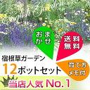 【送料無料】【お得なセット】花苗 宿根草おまかせ12種12ポットセット (育て方メモ) 人気の宿根草12ポットセット 長く楽しめるオ…