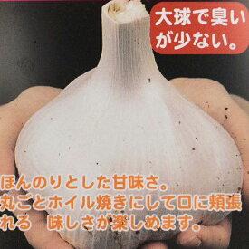 野菜苗 ジャンボニンニク 3号ポット苗