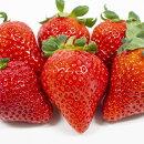 いちごトチオトメ3号ポットイチゴ苺