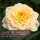 【】【ミニバラ】キョーポールセンローズ3,5号ポット【バラ苗】【薔薇】