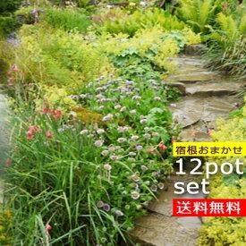 【送料無料】 花苗 宿根草苗 品種おまかせ12種 合計12ポットセット STS