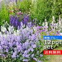 【送料無料】【12種セット】さわやかなブルーガーデンの苗セット 宿根草12種 計12ポットセット安心の育て方メモ付き