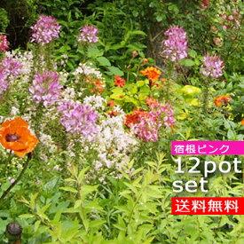 【送料無料】【12種セット】ピンクガーデン宿根草セット 12種 計12ポットセット 安心の育て方メモ付き STS