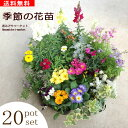 【送料無料】季節の花苗 20ポットセット 花色ミックス寄せ植えやギフトに最適!
