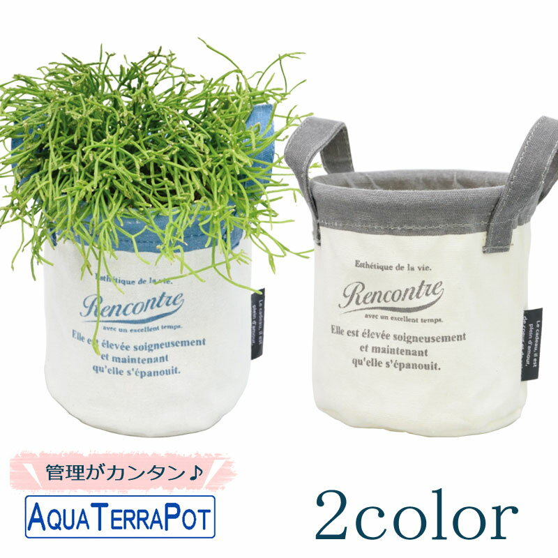 インテリアグリーン アクアテラポット キャンバスバッグ10.5 全2色 底面給水仕様 シュガーバイン アイビー ヘデラ ペペロミア ワイヤープランツ