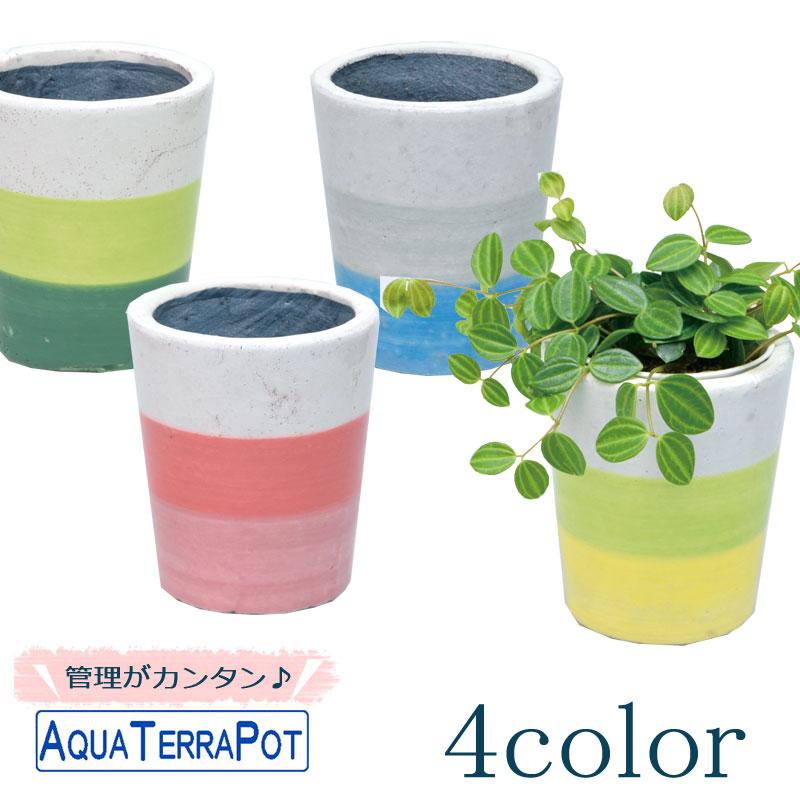 インテリアグリーン アクアテラポット スリーボーダー10.5 全4色 底面給水陶器鉢入り シュガーバイン アイビー ヘデラ ペペロミア ワイヤープランツ