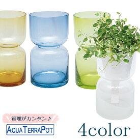 アクアテラポット ハイドロカラーグラス 10.5全4色 観葉植物全10種 シュガーバイン ペペロミア アイビー ワイヤープランツ プミラ ピレア他