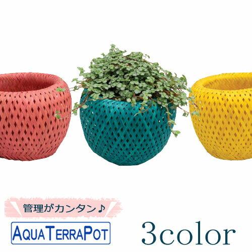 インテリアグリーン アクアテラポット アジアンバスケット カラー10.5タイプ 全10種 底面給水仕様  ギフト 観葉植物 シュガーバイン アイビー ペペロミア