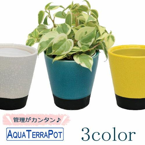 インテリアグリーン アクアテラポット メイズ10.5タイプ 全10種 底面給水陶器鉢入り ギフト 観葉植物 シュガーバイン アイビー ペペロミア