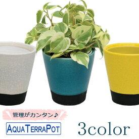 アクアテラポット メイズ 10.5タイプ 観葉植物全10種 シュガーバイン ペペロミア アイビー ワイヤープランツ プミラ ピレア