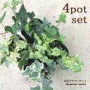 【4個セット】観葉植物 ヘデラ イングリッシュアイビー 3号ポット苗 計4ポット