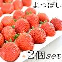いちご苗【2個セット】 イチゴ よつぼし 3〜3.5号ポット イチゴ 苺 ガーデニング 家庭菜園 ベランダ菜園 プランター …