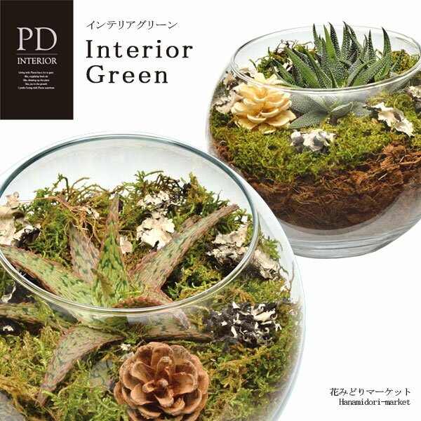 インテリアグリーン PDインテリア ID-3201 ギフト 観葉植物 テラリウム 多肉植物 ガラス小物 シンプル スタイリッシュ ナチュラル インテリア雑貨