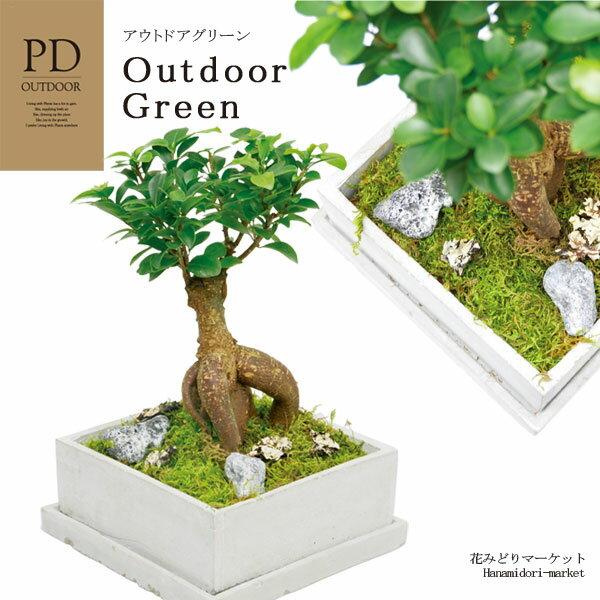 インテリアグリーン PDアウトドア OD-6101 ギフト 観葉植物 テラリウム 多肉植物 ガラス小物 シンプル スタイリッシュ ナチュラル インテリア雑貨