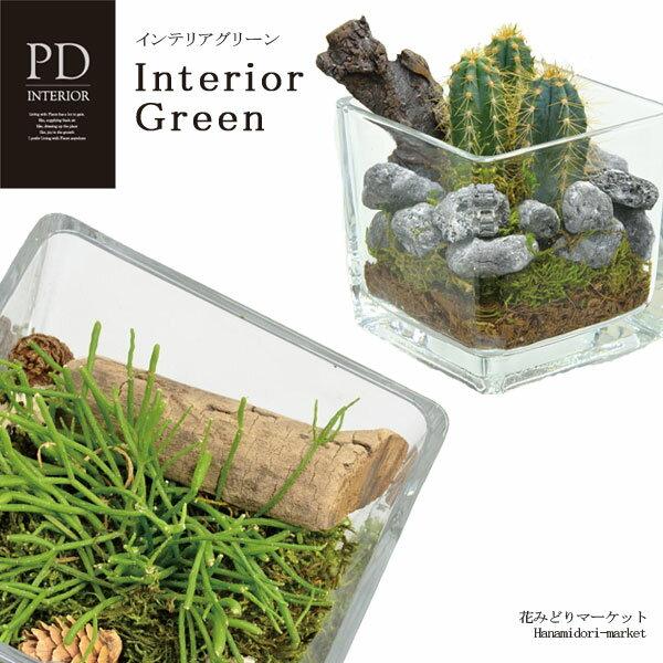 インテリアグリーン PDインテリア ID-3001 ギフト 観葉植物 テラリウム 多肉植物 ガラス小物 シンプル スタイリッシュ ナチュラル インテリア雑貨