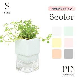 調湿ポット入り 観葉植物 Sサイズ ID-906 器=全6色 植物=全10種インテリアグリーン