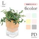底面給水調湿ポットLサイズID-905全6色インテリアグリーン全10種ギフト観葉植物シュガーバインアイビーヘデラペペロミアワイヤープランツ