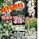 【L】【お得なセット】可憐なホワイトガーデンセット宿根草12種、12ポットセット(安心の育て方メモ付き)【送料無料…