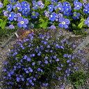 ベロニカ オックスフォード イングリッシュ ガーデン