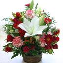 ■【送料無料】【お祝い 花】大輪の白ユリ(カサブランカなどユリ/ゆり/百合)のお祝い花(フラワーアレンジメント/花束)【誕生日・発表会…