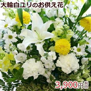 大輪系白ユリ(カサブランカ等)お供え花