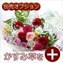 【生花ギフト用オプション】かすみ草(霞草/かすみそう/カスミソウ)花束やアレンジメントの添え花に白いカスミ草をプラスして、豪華にボ…