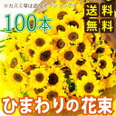 Bq sunflower100