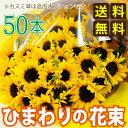 Bq sunflower50