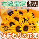 Bq sunflowerseany