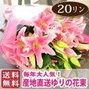 Bq pink20