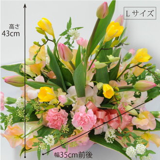 Hanako rakuten global market tulip birthday gifts gift opening buy it and earn 42 points about points negle Choice Image
