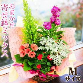 【あす楽12時まで受付】 送料無料 花 ギフト 誕生日 寄せ植え プレゼント 送別のお花 鉢花贈る 贈り物 女性 男性 結婚記念日 日頃の感謝 おまかせ寄せ鉢ギフト Mサイズ