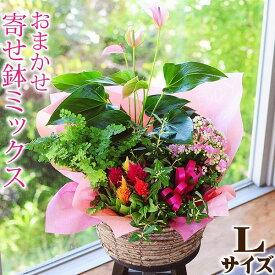 開店祝い 観葉植物 開店祝い 贈り物 開店祝 ギフト 誕生日プレゼント おまかせ寄せ鉢ギフト Lサイズ 結婚記念日 寄せ植え 鉢花贈る 寄せ植え贈り物 送料無料