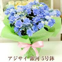 【送料無料】母の日ギフトあじさい紫陽花アジサイ_銀河