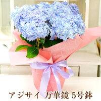 【送料無料】母の日ギフトあじさい紫陽花アジサイ_万華鏡マンゲキョウ