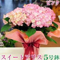 母の日スイートアリスピンクあじさい5号鉢贈り物ギフトお母さん母アジサイ紫陽花