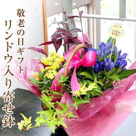 敬老の日 花 プレゼント 送料無料 ギフト リンドウ 鉢植え 花鉢 生花 鉢花 2020 フラワーギフト リンドウを入れた寄せ鉢 竜胆