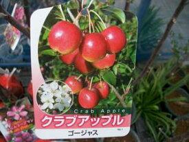 【クラブアップル・ゴージャス】(5号)ハナリンゴ・果樹