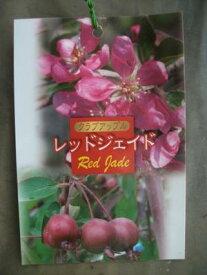 【クラブアップル・レッドジェイド】(5号)ハナリンゴ・果樹