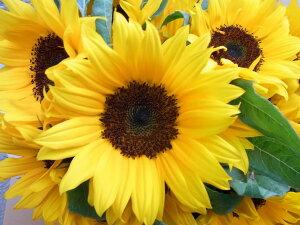 ひまわりの花束 高品質なヒマワリを年の数だけ花束に!お...