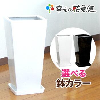 7号角高陶器鉢