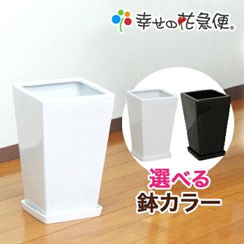 7号角陶器鉢