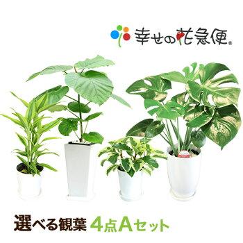 https://image.rakuten.co.jp/hanakyubin/cabinet/shohin/03267097/a_set.jpg