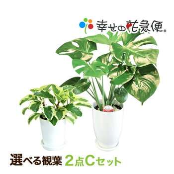 https://image.rakuten.co.jp/hanakyubin/cabinet/shohin/03267097/c_set.jpg