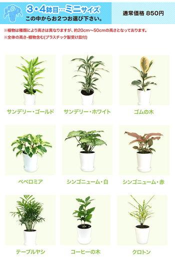 ミニ観葉スマホ商品説明文の選べる観葉植物も変更する