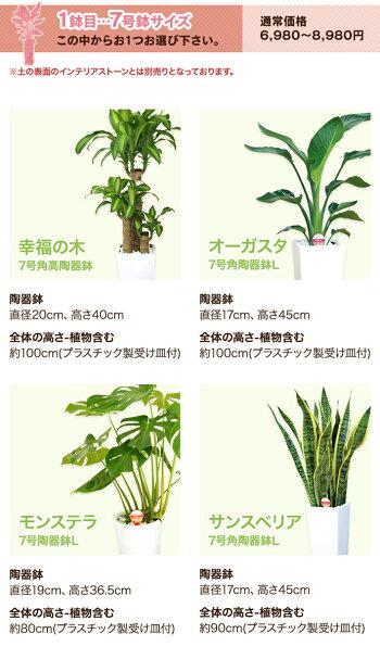 7号スマホ商品説明文の選べる観葉植物も変更する