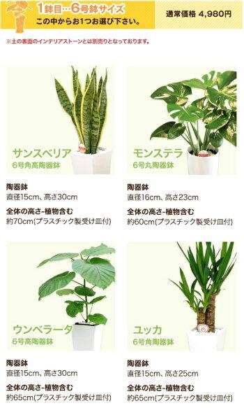 6-1スマホ商品説明文の選べる観葉植物も変更する