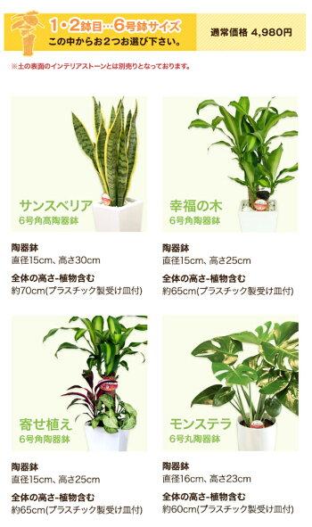 6号スマホ商品説明文の選べる観葉植物も変更する