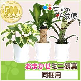 ミニ観葉植物【同梱用】1鉢500円※鉢・土のみとの同梱不可